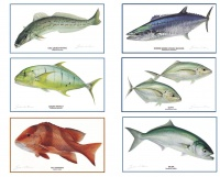 fish_species_series
